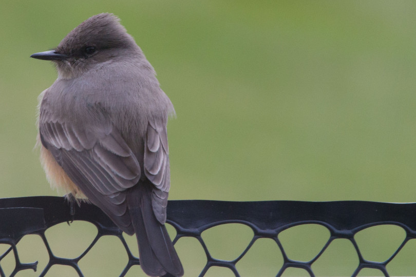 Bird-5424